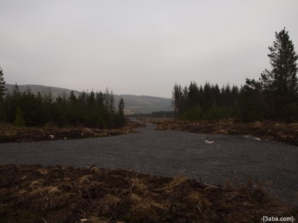 Forest road - Ireland